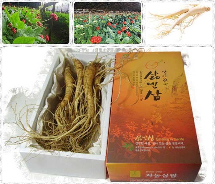 ต้นโสมเกาหลีและผลิตภัณฑ์จากโสม