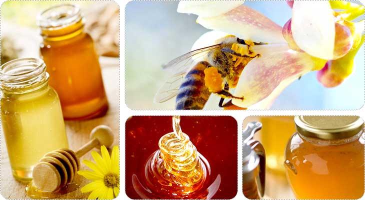 น้ำผึ้งมานูกา (manuka honey)